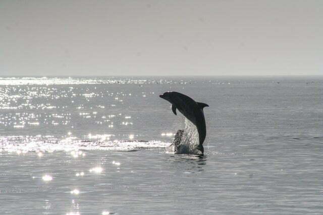 Dolfijn zafar dood