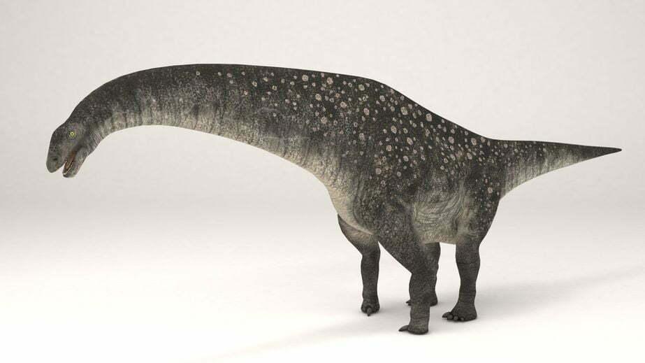 dinosaurusei gevonden