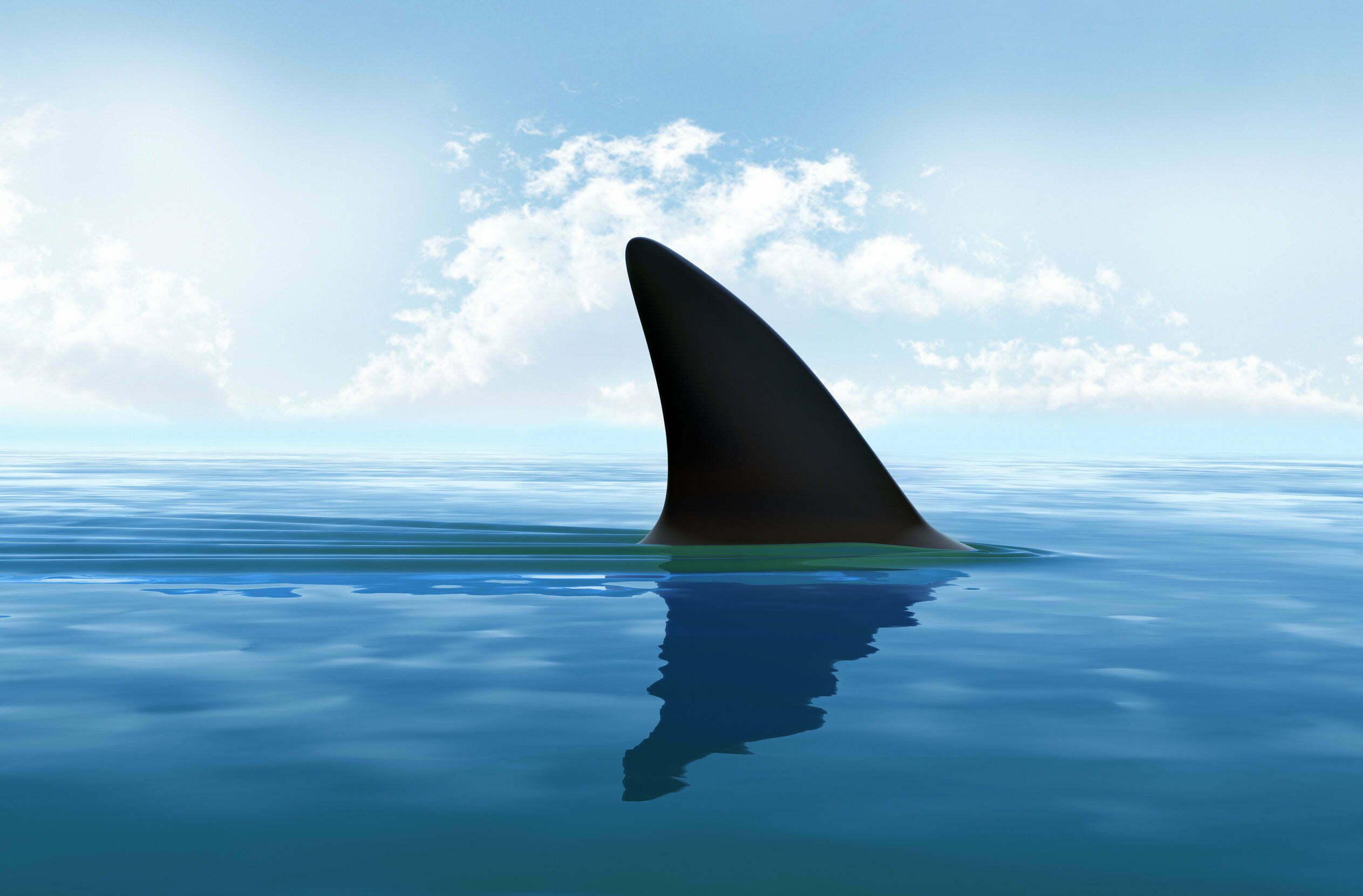 De vijf gevaarlijkste haaien ter wereld