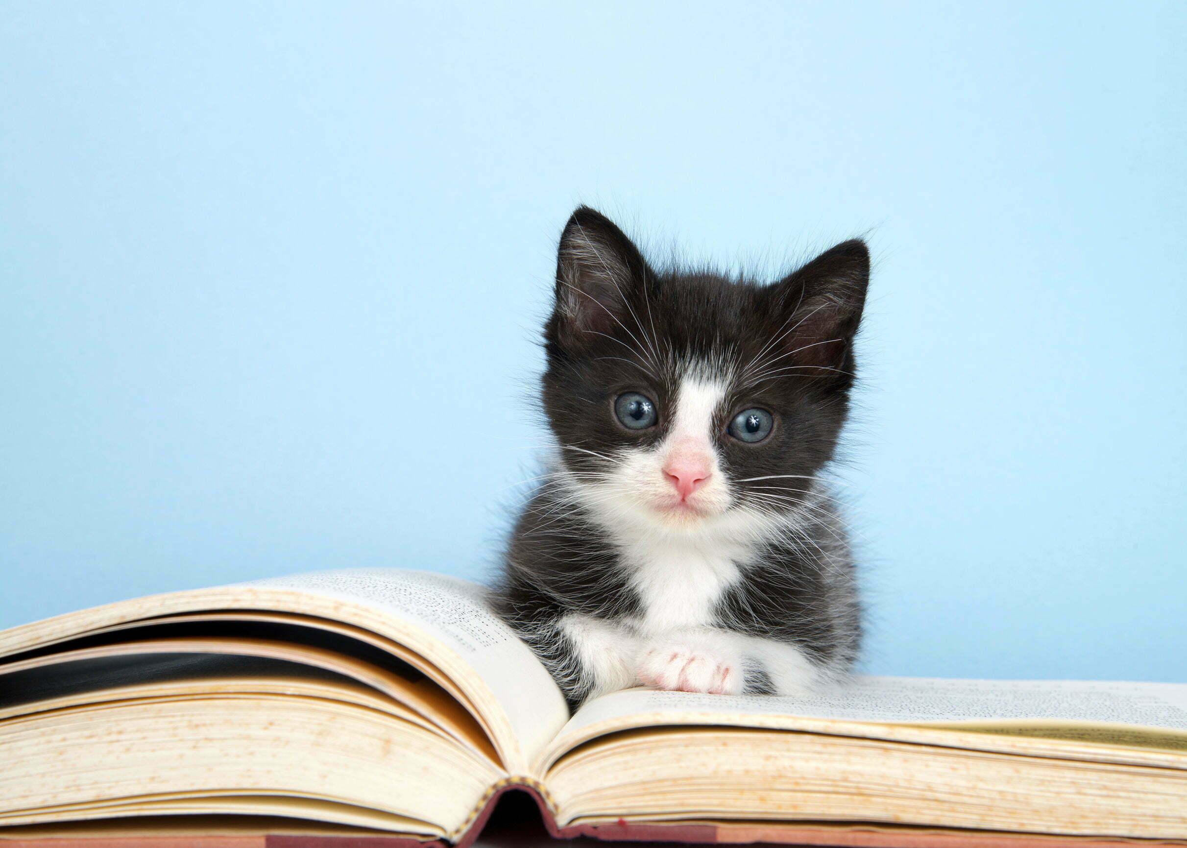 Dit zijn de meest gelezen boeken ter wereld