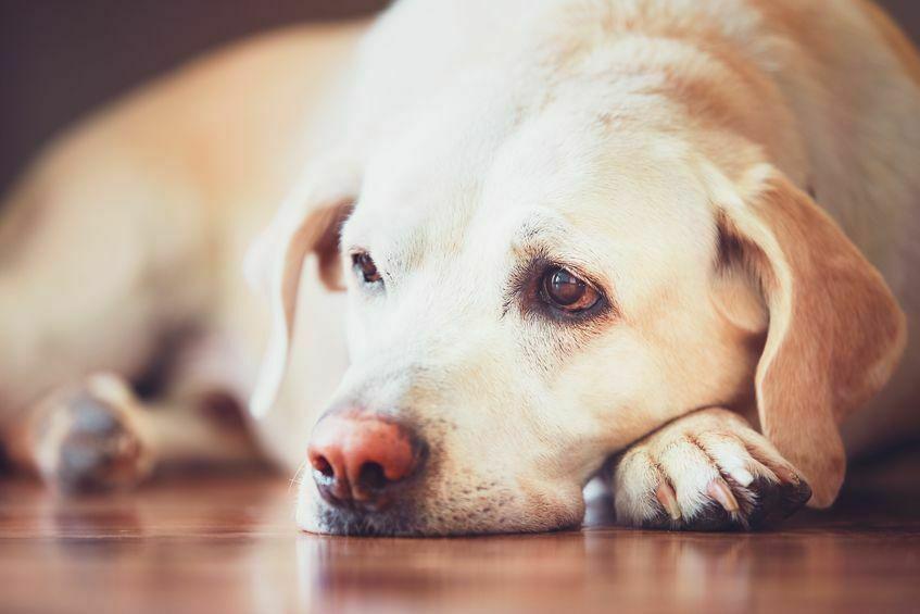 hoe werkt euthanasie bij honden