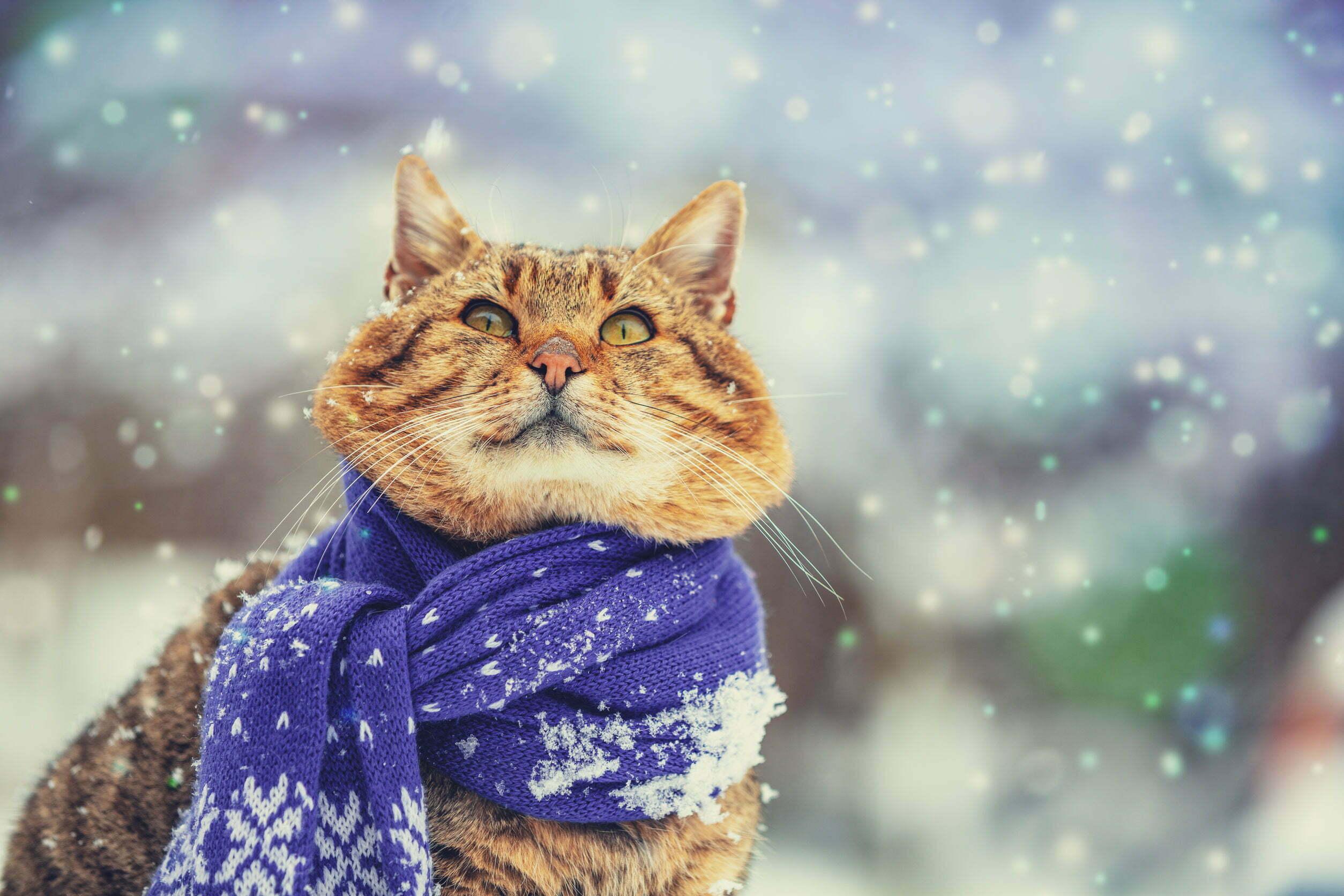 Feiten en fabels over sneeuw